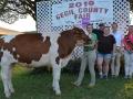 Grand-Dairy-Steer