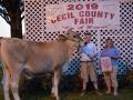 Reserve-Dairy-Steer