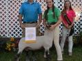 Reserve-Sheep
