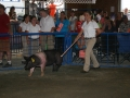CecilCoFair2013Night4043.JPG