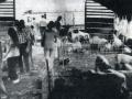 animal barns 1980.jpg